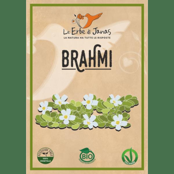 Zioła w proszku - Brahmi (1)