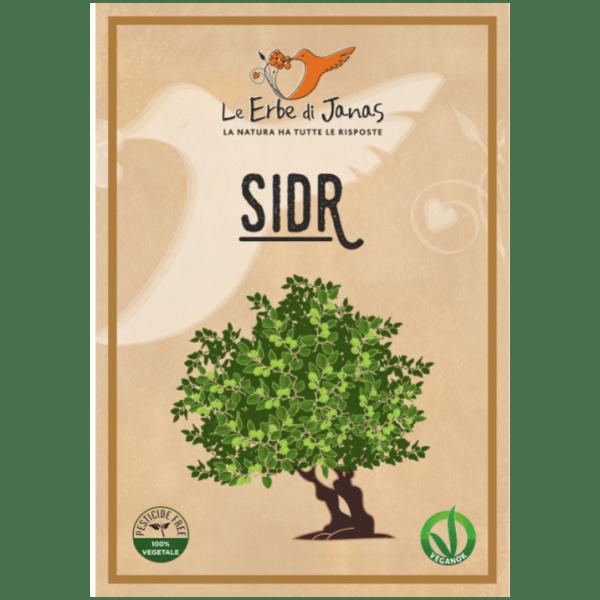Zioła w proszku - Sidr - Głożyna (1)